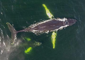 2- Baleine 1.jpg