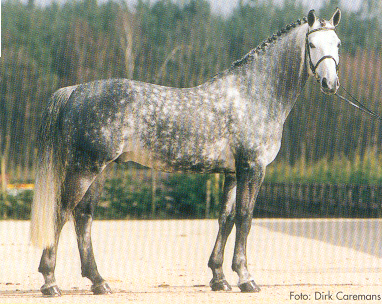 Sire:  Parco