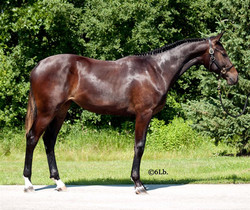 Yearling, 2013
