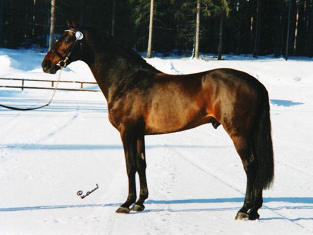 LeVainqueur, '93 Holsteiner Stallion