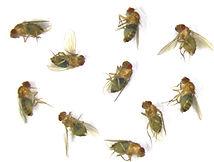 Fly feeding.jpg