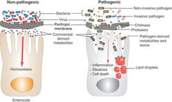 Symbiosis and Pathogenesis