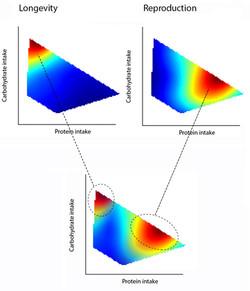Nutritional geometry