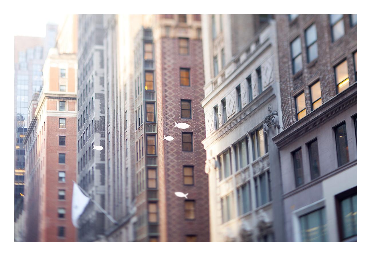 celia-goumard-photographe-newyork