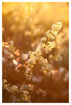 celia-goumard-photographe-fleurs