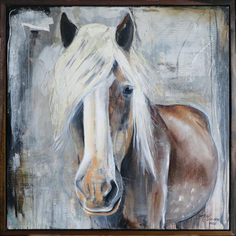 """""""Duke"""" of Becky's Hope Horse Rescue"""