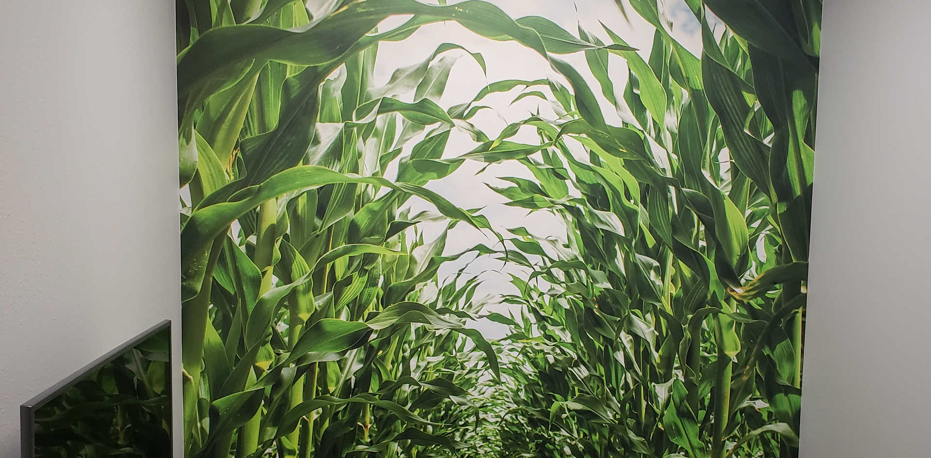 Christensen Farms: Meeting Room Wallcovering