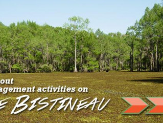 Lake Bistineau and Management Activities