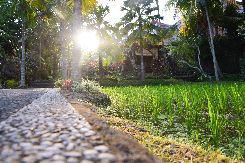 Ubud's street