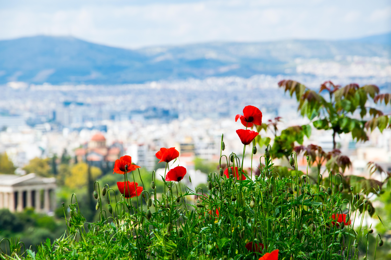 Acropole, Athènes, 2014
