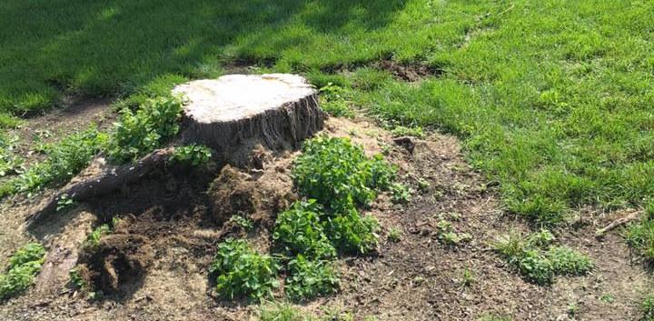 stump 2.jpg