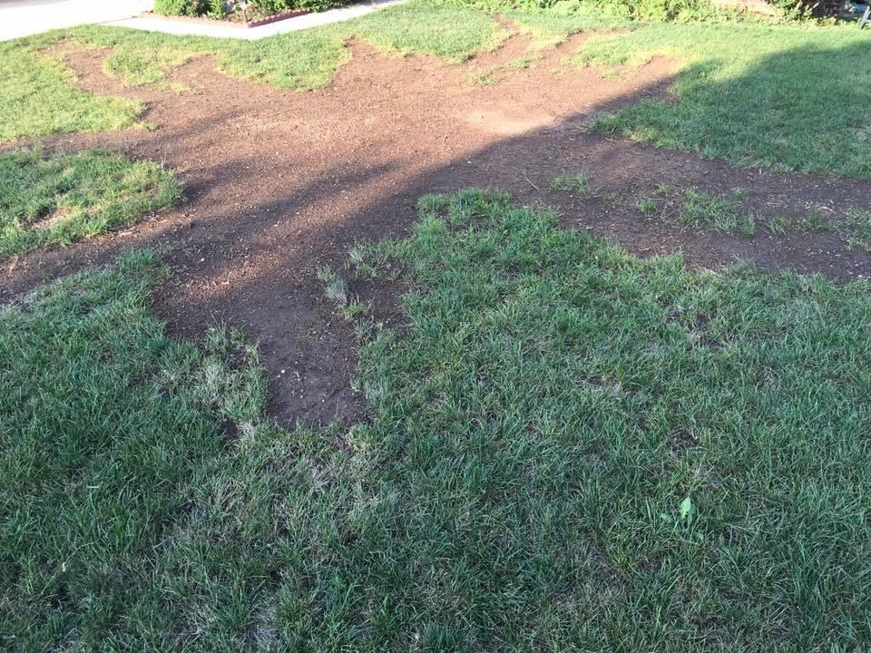tree 3 gone.jpg