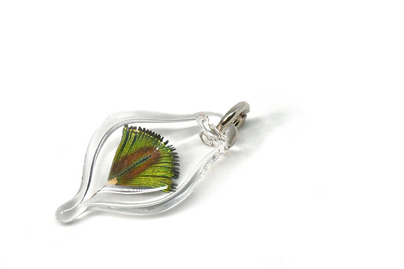 Glass Capsule with Peacock Feather