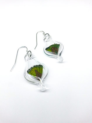 Glass Capsule Earrings with Peacock Feathers