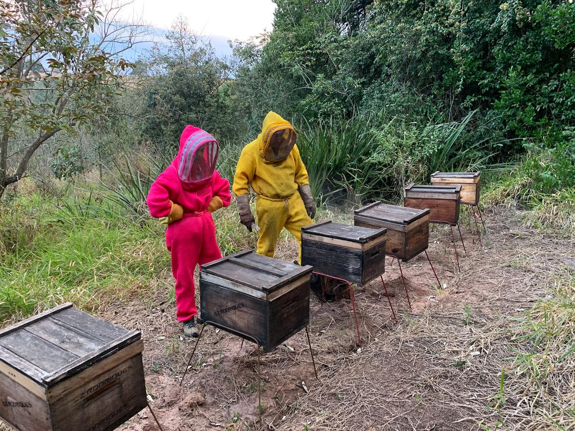 Brazilian Beekeepers tending to hives