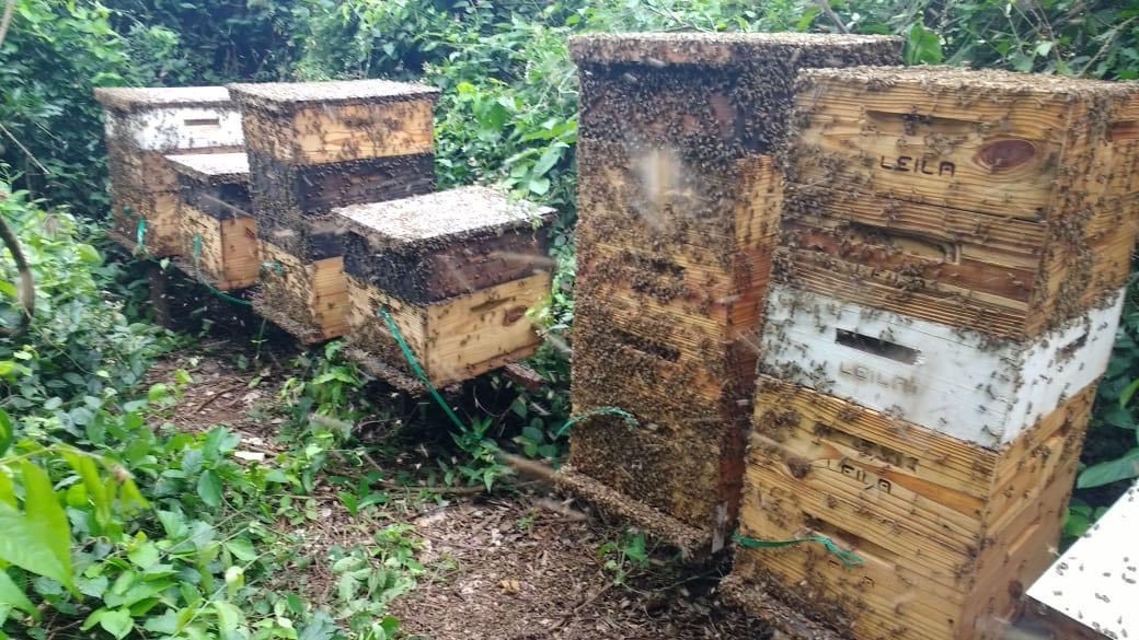 Cibo Uva hives based out of Brazil