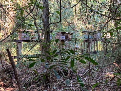 Honey Bee Habitat