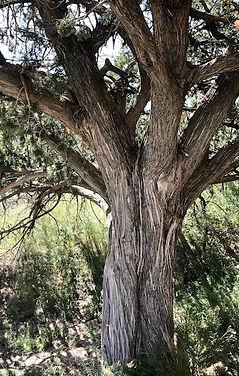 Strength-Tree.jpg