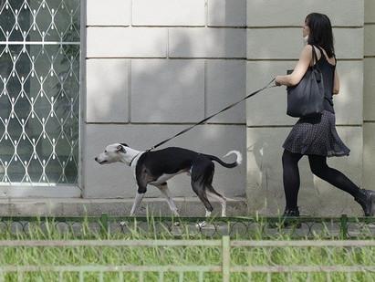 WALKING YOUR DOG