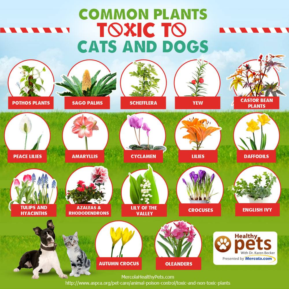 Design Plants Safe For Dogs common plants toxic to cats and dogs homemade grain free dog treats puppy style more new york