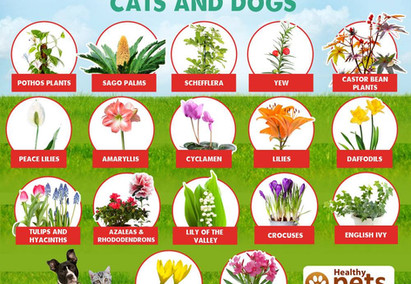 Common Plants Toxic to Cats and Dogs