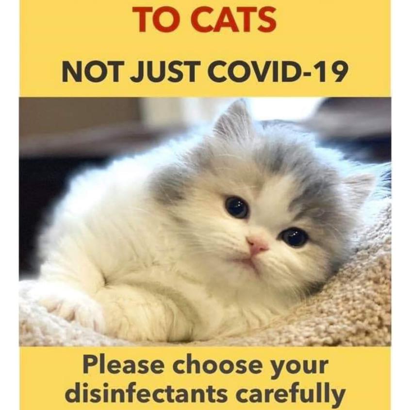 COVID-19 kitty