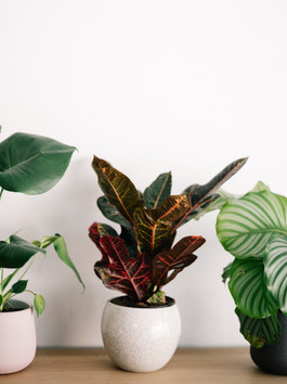 Why House Plants are Good for You