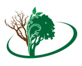 BV Logo-Color Icon.png