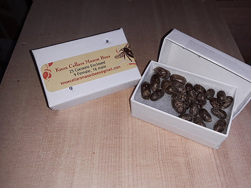 Orchard Mason Bees-  25 Loose Cocoons