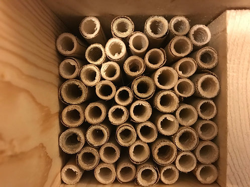 Natural Reed Mason Bee Tubes  (50 count)