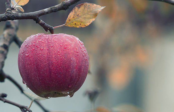 agriculture-apple-blur-257840_edited.jpg