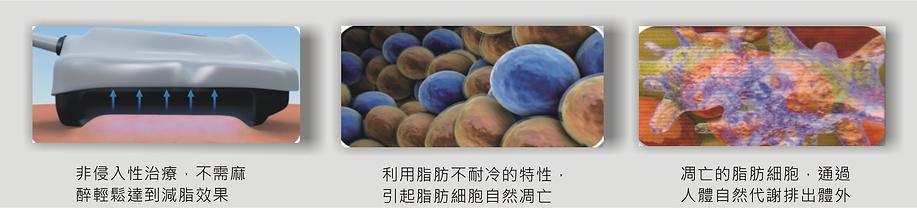 細胞11.png