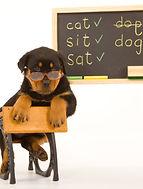 dog school.jpg