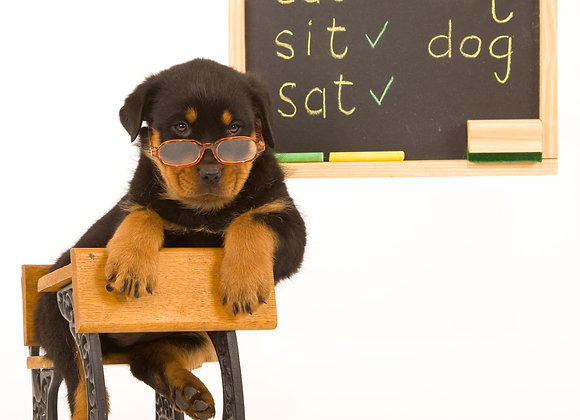 Advanced Puppy - Graduates of Puppy Class ONLY