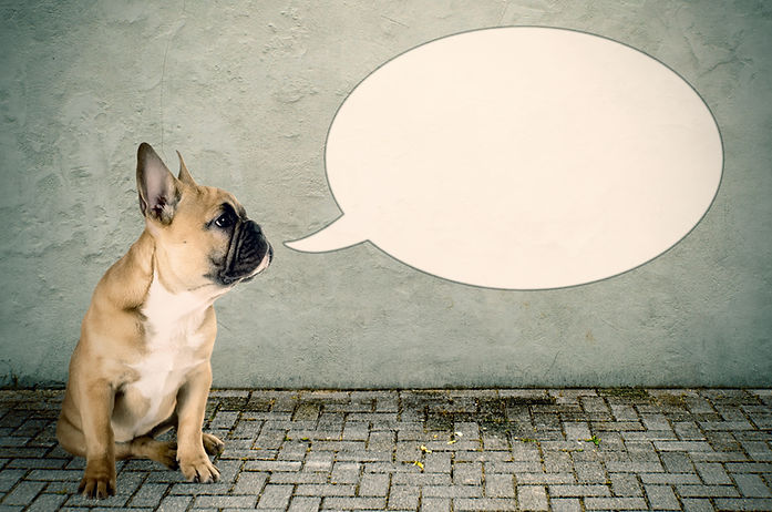 a French bulldog with a speech bubble.jp