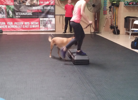 K9 Fit Club Single Class