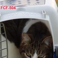FCF-504