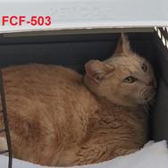 FCF-503