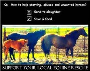 b956018ad608339f922399f0bff3e010--horses