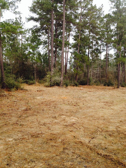 Camping The Pines 2