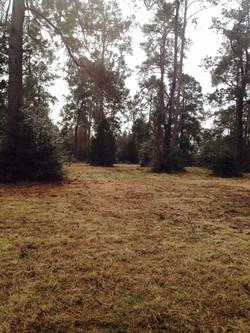Campsite The Cedars