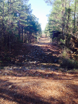 Rock Ditch & Big Bog