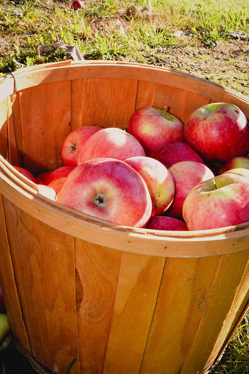 Organic Farmer's Fresh Heirloom Apples