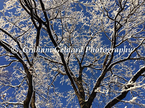 Tree, Snow, Sky, Abstract, Blue, White, Nature Abstract, Abstracts From Nature, Snow Covered Trees, Nature Photography, Buy Nature Photography, Nature Photography For Sale, Fine Art Nature Photographyfi