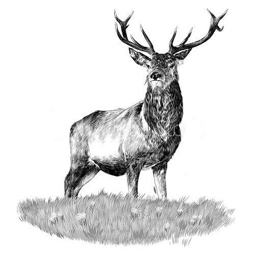 Hirsch- oder Wildschweinwurst