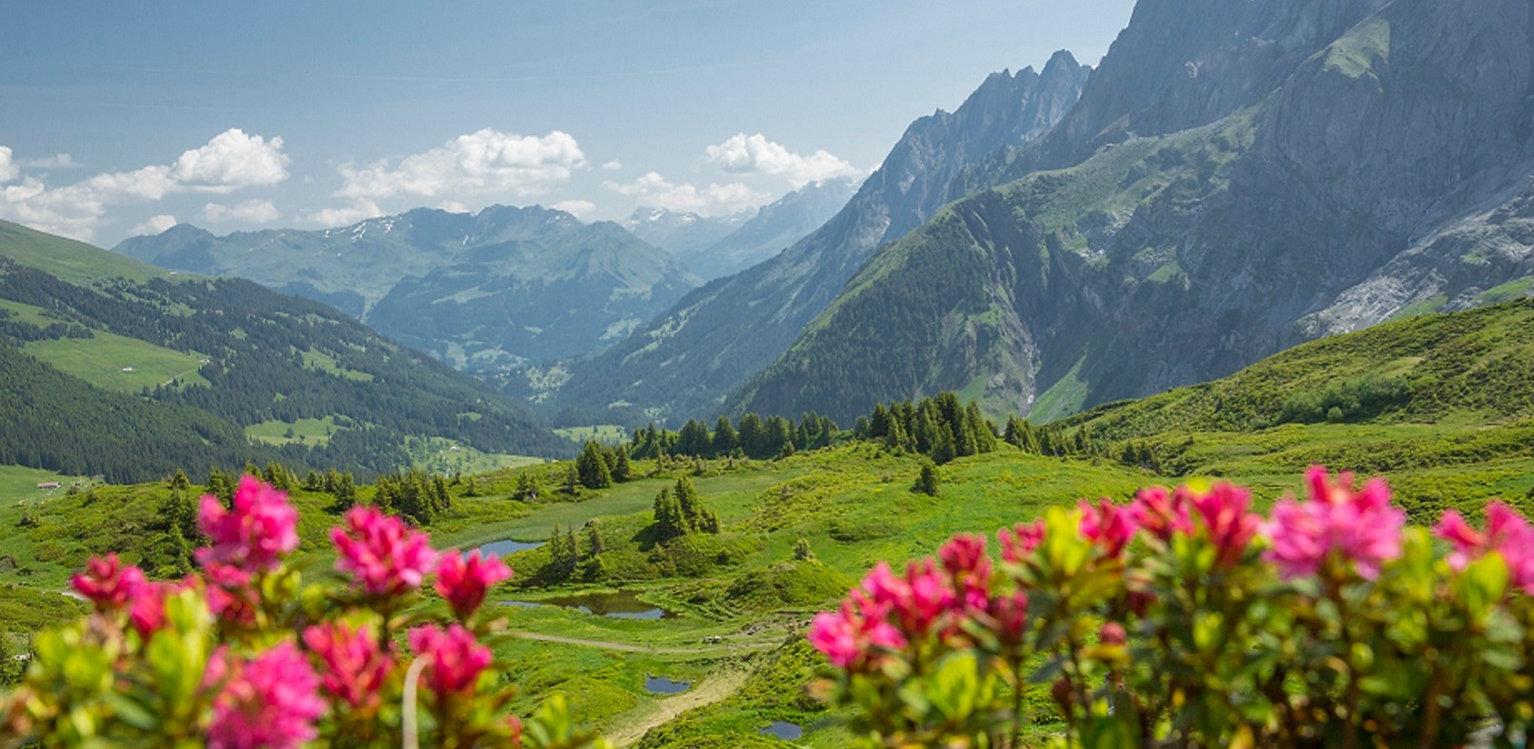 Aussicht Grosse Scheidegg Richtung Haslital
