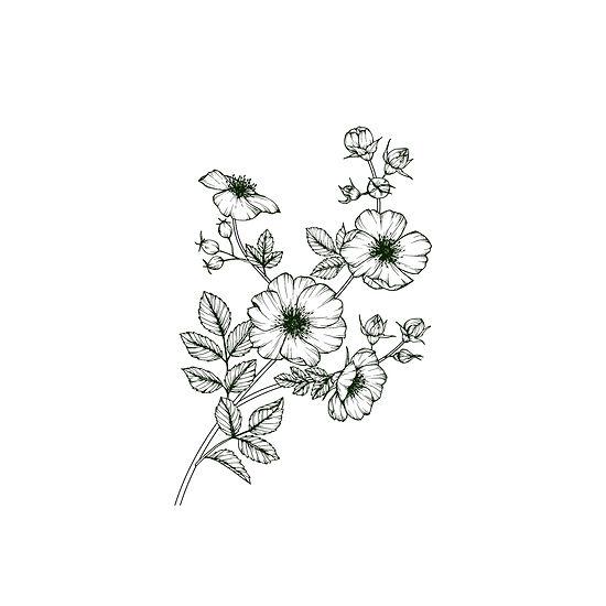 Flower%20Branch%20_edited.jpg