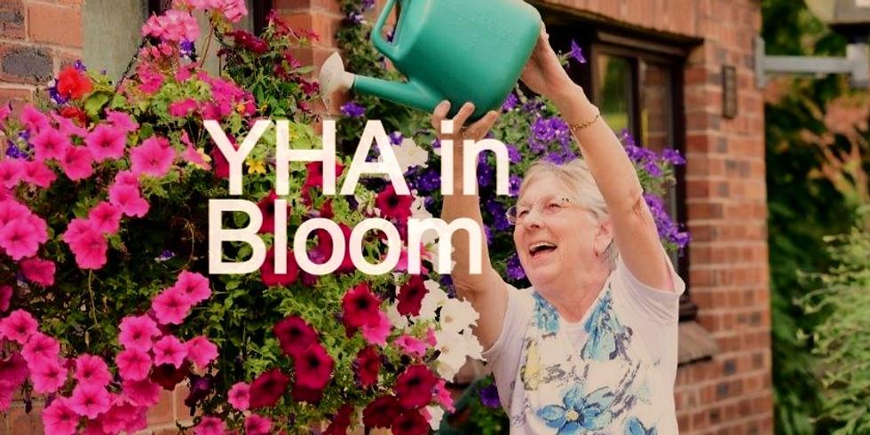 YHA in Bloom Judging