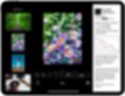 Wise Photos app iPad