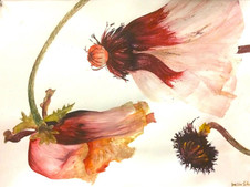 """Watercolor Study, 18"""" x 24"""" on Watercolor Paper"""